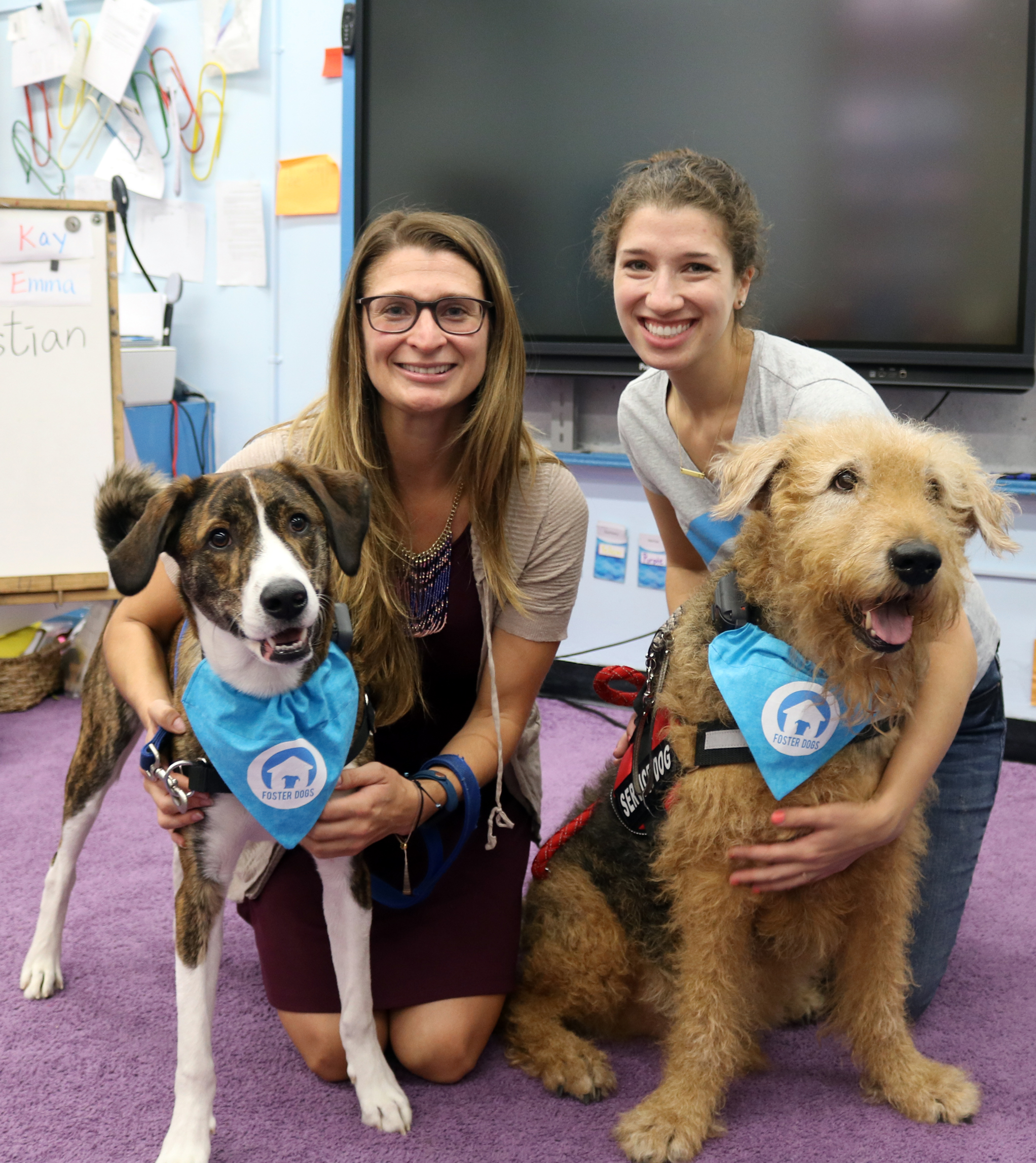 social action project dogs